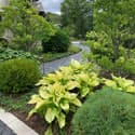 Country Club Road front walk landscaping hostas